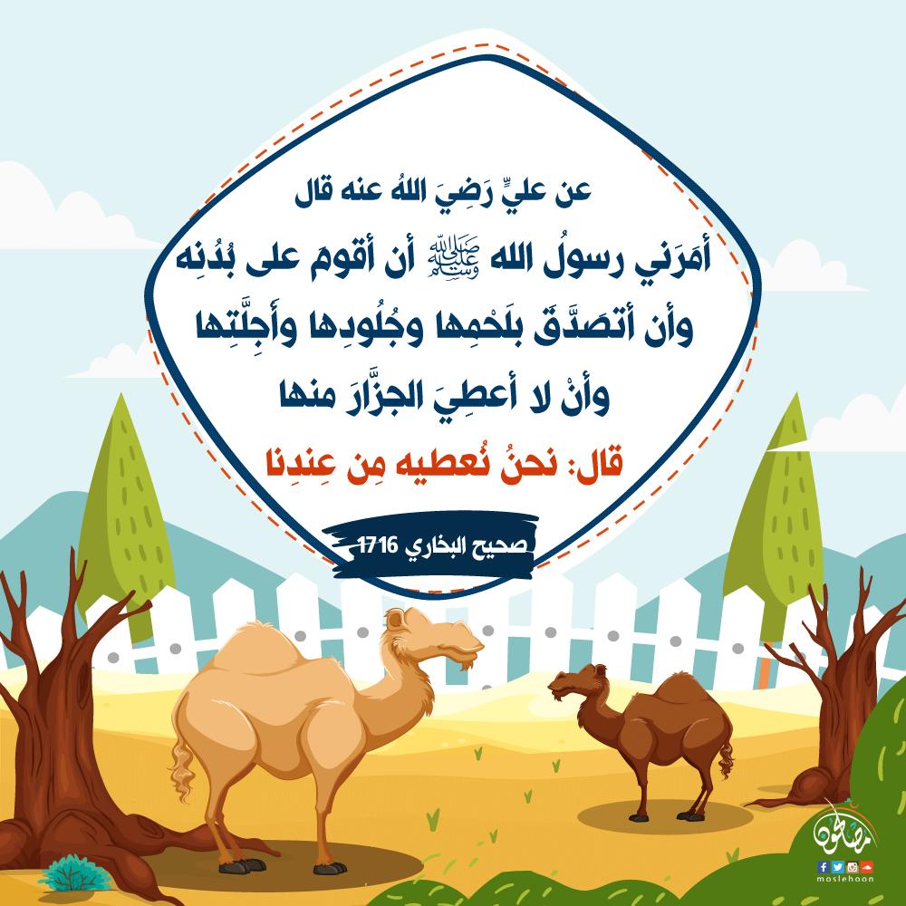 كيفية معاملة النبي ﷺ للجزار الذي يذبح الأضحية